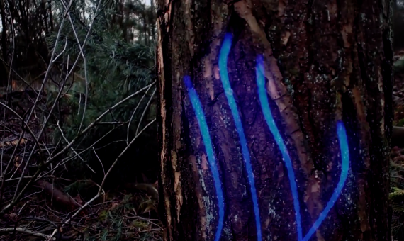 VFX Experiment: The Forest